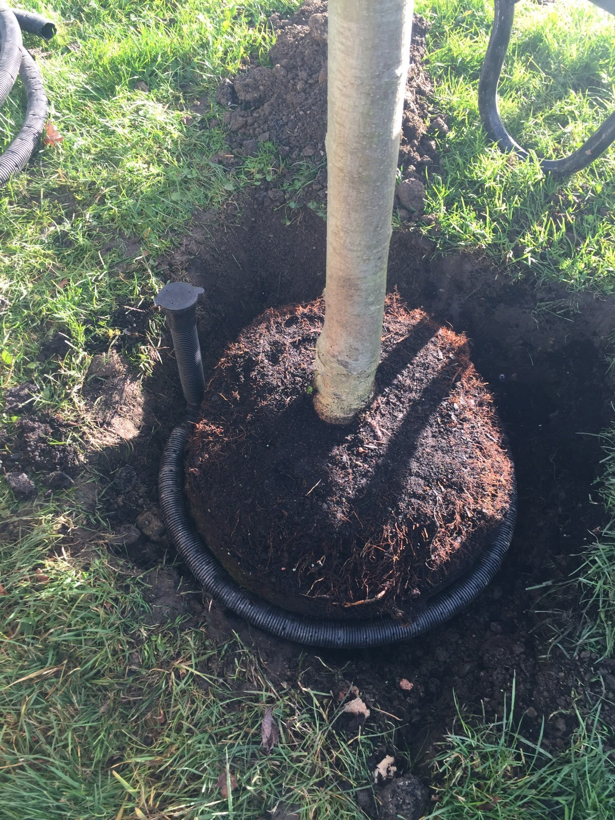 Highway tree planting – GC Landscape Management Ltd